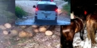 16 focuri de arma intr-o localitate din judetul Neamt. Lupte ca in filme intre hotii de lemne si politisti