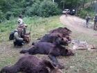 Braconaj. 5.000 de animale din specii protejate, impuscate in 8 ani in România