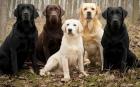 Cercetătorii au demontat mitul conform căruia 1 an din viaţa unui câine este echivalent cu 7 ani la om