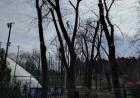 Dâmbovița: Bărbat omorât de un copac pe care îl tăia ilegal