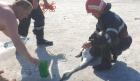 Lebădă blocată în nămolul din Lacul Sărat, salvată de pompieri