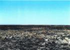 Ministrul Mediului, Cristiana Palmer Pașca, a mușamalizat incendiul devastator care a distrus 400 ha din Delta Dunării