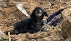 Un câine din Suceava și-a păzit gospodăria încă 3 ani după ce i-au murit stăpânii