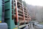 Un pădurar din Mureş, agresat şi sechestrat de hoţii de lemne