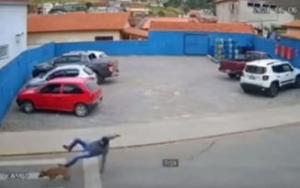 Barbat lovit violent de un caine pe trecerea de pietoni. Incidentul extrem de bizar produs in Botosani