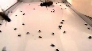 Iata cum scapi doar in cateva secunde de mustele, tantarii sau insectele care-ti intra vara in casa