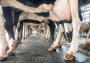 Laptele de vacă are cel mai relevant cancerigen identificat vreodată