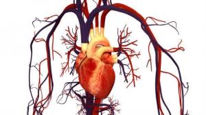 Un nou bandaj pentru inimă