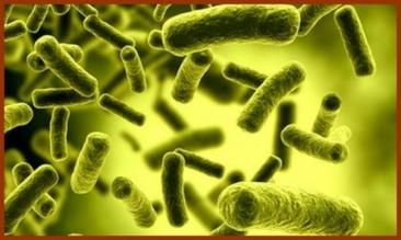 Toxinele, dusmani periculosi pentru sanatatea noastra