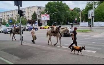 """VIDEO Doi turişti străini plecaţi călare spre Castelul Bran s-au rătăcit în Craiova: """"Nu ne aşteptam la reacţia asta!"""""""