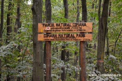Graţiela Gavrilescu a teleportat 4 ha de pădure din Parcul Natural Comana către naşul lui Gheorghe Flutur