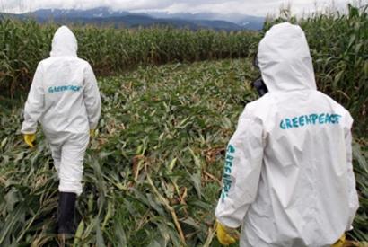 Greenpeace: SUA a făcut presiuni pentru ca UE să aprobe importurile de alimente modificate genetic