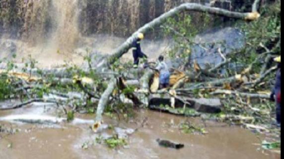 20 de liceeni au murit zdrobiți de copaci în timp ce înotau
