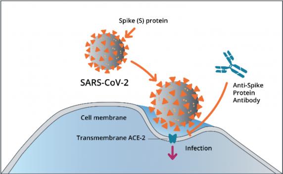 """Bomba cu efect întarziat a vaccinarii anti-Covid: Proteina """"S"""" modificată genetic e suficientă pentru a cauza boala gravă chiar și-n lipsa restului componentelor virusului"""