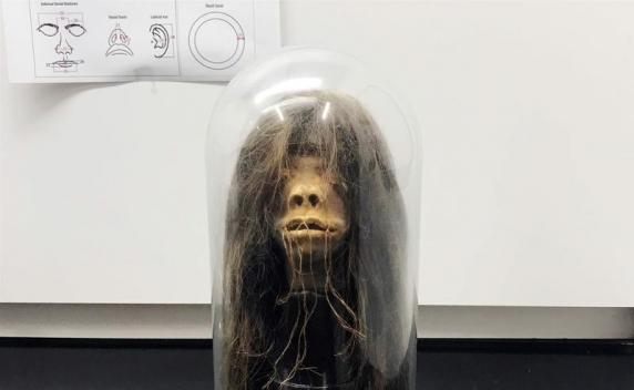 Descoperire macabră: Un cap micșorat expus ca obiect de recuzită timp de 40 de ani a fost autentificat ca fiind real