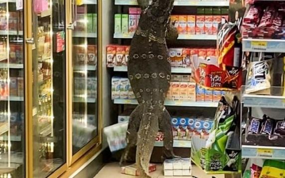 E viral! O şopârlă de aproape doi metri se caţără pe raftul unui supermarket în strigătele disperate ale cumpărătorilor