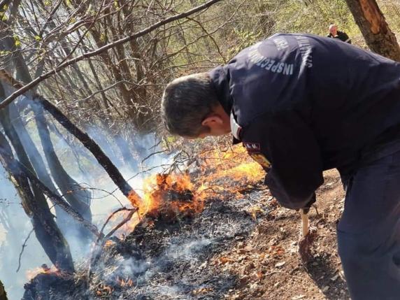 Mafia pădurilor din Certeze își șterge urmele