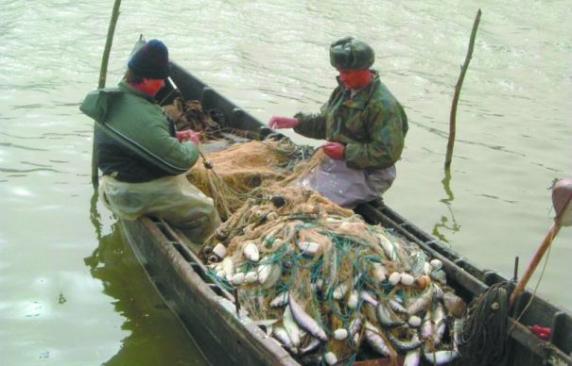 Ministrul Adrian Oros falimentează industria piscicolă din Deltă, sărăcind populația locală în favoarea peștelui din import, mai prost și mai scump!
