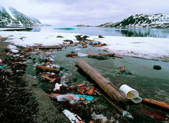 Ninge cu microplastic în Siberia! Cercetătorii ruși încearcă să afle răspunsuri după ce si pestii au fost infectati