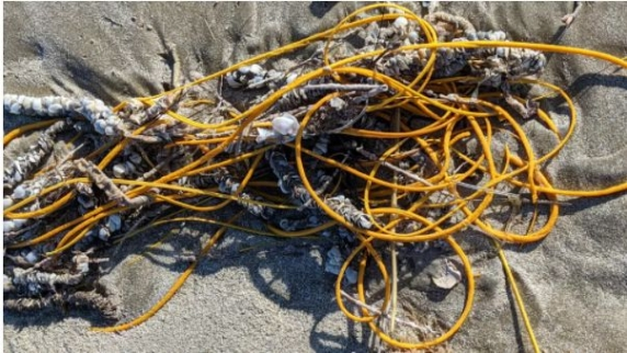 O creatură ca o grămadă încâlcită de sfori a fost găsită eșuată pe o plajă din Texas
