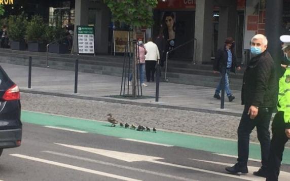 O familie de raţe a fost escortată de poliţişti prin centrul oraşului Cluj-Napoca
