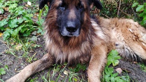 Povestea impresionantă a câinelui care a supraviețuit după ce stăpânii i-au făcut injecția letală și l-au îngropat în pădure