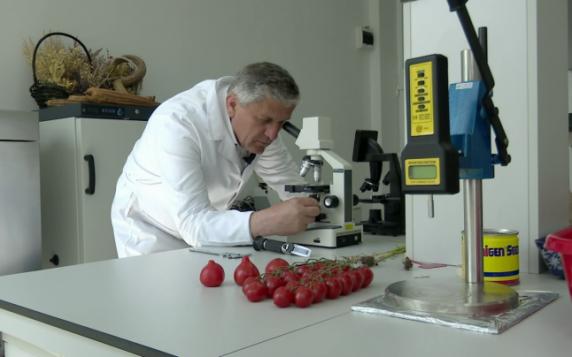 Roşiile ţuguiate, risc pentru sănătate. Cum recunoaştem tomatele forţate cu substanţe chimice