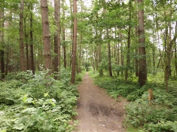 Scandal în Vrancea din cauza unor cuie aruncate pe drumul forestier: Pădurarul spune că sunt contra hoților de lemne, unii șoferi vor despăgubiri pentru cauciucurile sparte