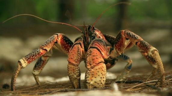 Scene desprinse din filmele de groază, după ce zeci de crabi uriași au invadat un camping