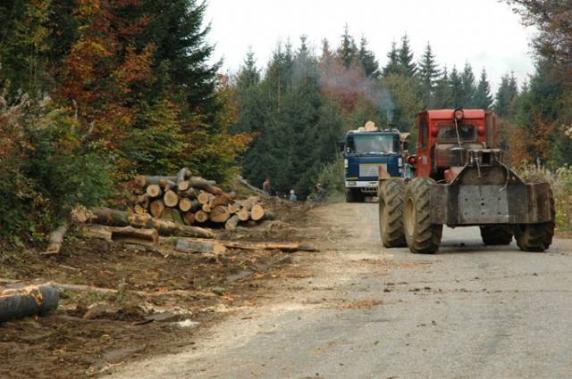 Se înfiinţează garda forestieră