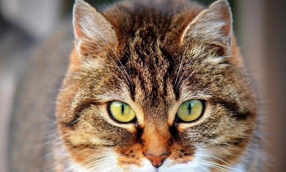 Situație ruptă din desene animate. O pisică, reținută pentru trafic de droguri, a evadat dintr-o închisoare de maximă securitate
