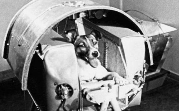 Trista poveste a căţeluşei Laika, primul animal trimis în spaţiu