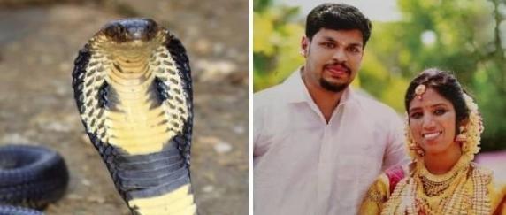 Un indian și-a ucis soția băgându-i o cobră în pat. A mai incercat s-o omoare si cu o viperă dar nevasta a scapat!