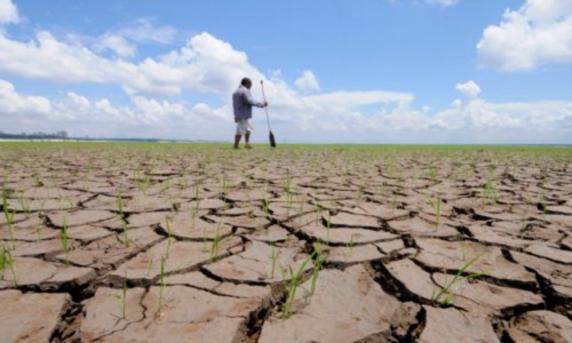 Vezi ce despăgubiri primesc fermierii cu terenuri afectate de secetă