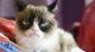 A murit Grumpy Cat, una dintre cele mai faimoase pisici din lume