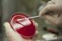 Alte 4 decese din cauza coronavirusului. Bilanțul a ajuns la 34