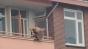 Bărbat fotografiat în timp ce trage cu arbaleta în trecători, de la balcon. Două persoane au murit