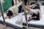 Câine târât cu excavatorul mai mulți kilometri. A fost salvat de șoferii care au blocat utilajul