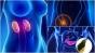 Care sunt cele 7 organe de care nu ai nevoie ca sa traiesti