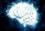 Creierul strămoșilor noștri a fost surprinzător de asemănător cu cel al maimuțelor până foarte recent