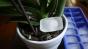 De ce sa pui saptamanal cuburi de gheata la baza plantelor din ghiveci