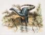 Dinozaurii de Hațeg: O echipă internațională condusă de un paleontolog maghiar a descoperit un site unic al uriaselor reptile