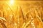 Egiptul a cumpărat 120.000 de tone de grâu din România în această lună