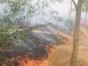 Incendiu puternic în Delta Dunării: 10 hectare de vegetaţie uscată, mistuite de flăcări