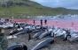Insulele Feroe: 1.400 de delfini uciși într-o zi, în cadrul unei tradiții de sute de ani