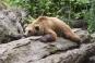 O copila a dat nas in nas cu un urs in parcul central din Sinaia. Cum a reactionat un politist