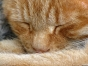 O pisică din Belgia a fost infectată cu noul coronavirus. Este primul caz din Europa