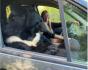 O tânără călătorește prin Rusia cu o ursoaică pe locul pasagerului din dreapta. Cele două dorm și pescuiesc împreună