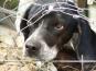 """Proiectul """"Politiei Animalelor"""", elaborat de ministrul Vela, contestat de ONG-urile din domeniu"""