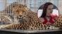 Tânără atacată și mutilată de un leopard în timpul unei şedinţe foto